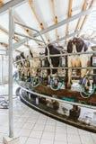 Krowy w nabiału gospodarstwie rolnym, krowa doju łatwość zdjęcia royalty free