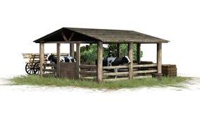 Krowy w stajni na białym tle Obrazy Stock