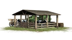 Krowy w stajni na białym tle Zdjęcia Royalty Free