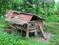 KROWY W stajni W INDONEZJA Zdjęcia Stock