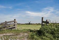Krowy z Tradycyjnymi Holenderskimi wiatraczkami w Zaanse Schans w holandiach obraz stock