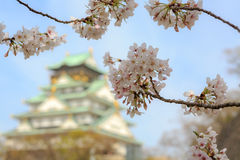 Körsbärsröd blomning i den Osaka slotten, Osaka, Japan Royaltyfri Bild