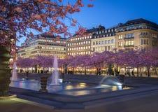 Körsbärsröd blomning i Kungstradgarden, Stockholm Arkivbild