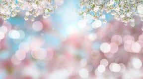 Körsbärsröd blomning på defocussed bakgrund Royaltyfria Bilder