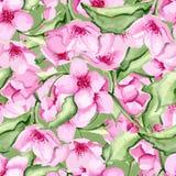 Körsbärsröd modell för blomning Fotografering för Bildbyråer
