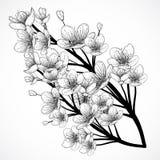 Körsbärsröd Treeblomning Drog vektorillustrationen för tappning skissar den svartvita handen in stil Arkivbilder