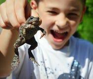 Kröten-Aufregung Stockfoto