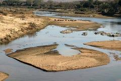 Krugar flodplats Arkivfoton