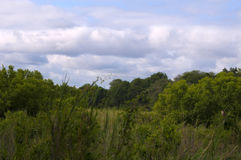 kruger国家公园 库存图片