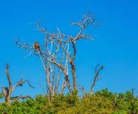 Kruger nationaal park Stock Afbeeldingen