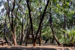 Kruger National Park Stock Photos