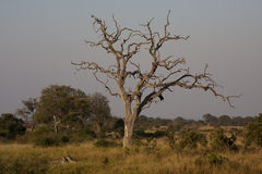 Kruger National Park Landscape Stock Image
