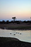Kruger National Park, Limpopo and Mpumalanga provinces, South Africa Royalty Free Stock Photo
