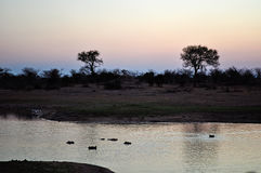 Kruger National Park, Limpopo and Mpumalanga provinces, South Africa Royalty Free Stock Photos
