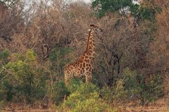 Kruger National Park South Africa stock image