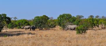 Kruger nationalpark-, Limpopo och Mpumalanga landskap, Sydafrika Royaltyfri Fotografi