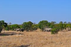 Kruger nationalpark-, Limpopo och Mpumalanga landskap, Sydafrika Royaltyfri Bild
