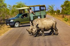 Kruger park narodowy, Południowa Afryka Obrazy Royalty Free