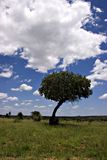 Kruger Park-Sommerlandschaft Lizenzfreie Stockbilder