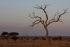 Kruger parka narodowego krajobraz Zdjęcia Royalty Free