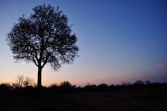 Kruger parka narodowego, Limpopo i Mpumalanga prowincje, Południowa Afryka Obrazy Royalty Free
