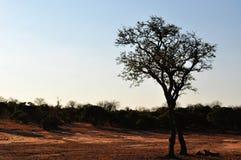 Kruger parka narodowego, Limpopo i Mpumalanga prowincje, Południowa Afryka Obrazy Stock