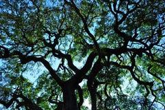 Kruger parka narodowego, Limpopo i Mpumalanga prowincje, Południowa Afryka Zdjęcie Royalty Free