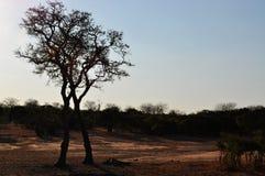 Kruger parka narodowego, Limpopo i Mpumalanga prowincje, Południowa Afryka Zdjęcie Stock
