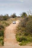 Kruger parka safari, Południowa Afryka Zdjęcia Royalty Free