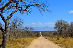 Kruger Safari Dirt Road Trail Savannah Stockfotografie