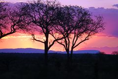 Kruger Sunset. Sunset in Kruger National Park Royalty Free Stock Photo