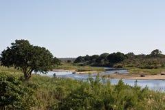 krugerliggandenationalpark Arkivbilder