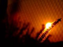 Kruid bij zonsondergang Royalty-vrije Stock Afbeelding