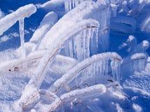 Kruid dat onder ijs wordt bevroren Stock Foto