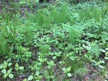 Kruidachtige textuur - jonge sappige netel onder de hoge stammen van groen gras Elymus repens - hoogste mening Weide wild onkruid royalty-vrije stock fotografie