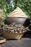 Kruiden cordifolia Tinospora Stock Afbeeldingen