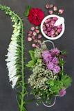 Kruiden en Bloemen voor Kruidengeneeskunde Stock Afbeeldingen