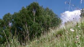 Kruiden en Bomen Lage Hoekmening stock video