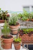 Kruiden en groenten op balkon Royalty-vrije Stock Afbeeldingen