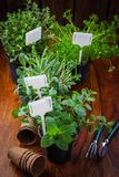 Kruiden en installaties voor het planten Royalty-vrije Stock Foto's