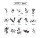 Kruiden en wilde bloemen plantkunde 15 reeks Uitstekende bloemen Vector illustratie Stock Foto