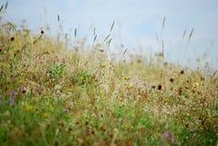 Kruiden en wind Stock Foto's