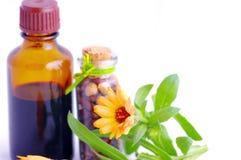 Kruiden geneeskunde met kruiden. Stock Afbeelding