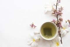 Kruiden gezonde dranken hete groene thee met bloem stock foto