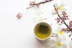 Kruiden gezonde dranken hete groene thee met bloem stock afbeeldingen