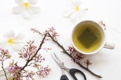 Kruiden gezonde dranken hete groene thee met bloem stock foto's