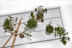Kruiden in Glazen op Wit Dienblad Stock Foto