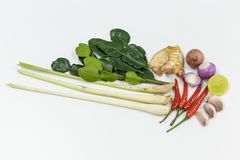 Kruiden met ingrediënten op witte achtergrond Stock Foto