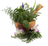 Kruiden Therapie stock afbeelding