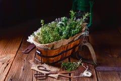 Kruideninzameling van: thyme, orego, rozemarijn Stock Afbeelding